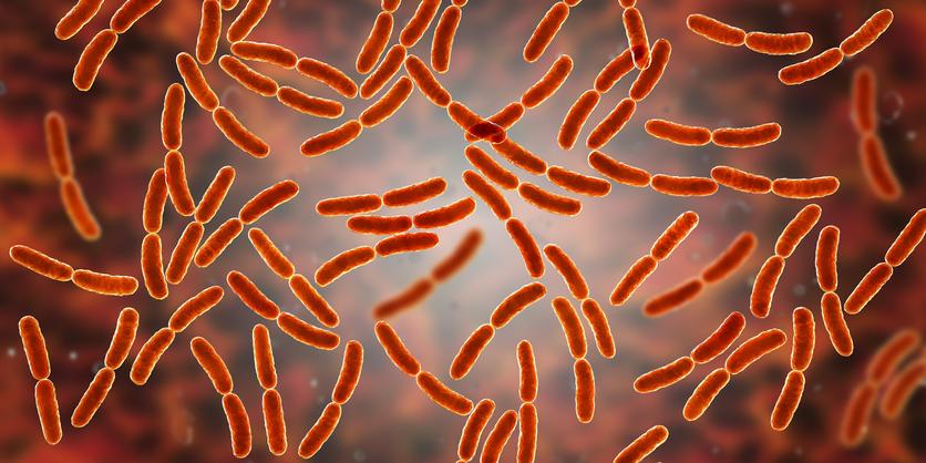 lactobacillus bacteria urinary microbiome